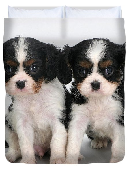 King Charles Spaniel Puppies Duvet Cover by Jane Burton
