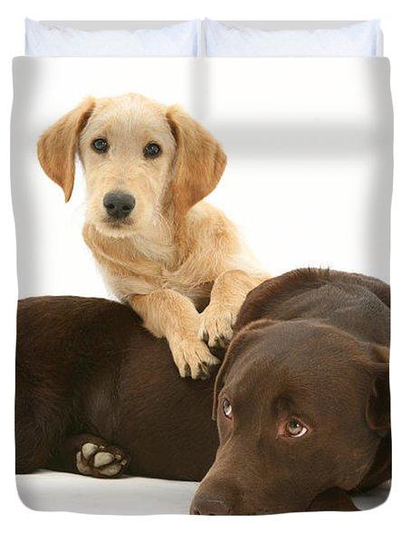 Labradoodle And Labrador Retriever Duvet Cover by Jane Burton