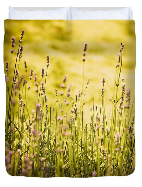 Duvet Cover featuring the photograph Lavender Gold by Sara Frank