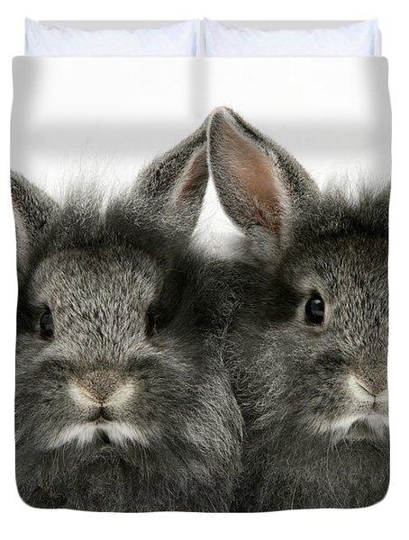 Lionhead Rabbits Duvet Cover by Jane Burton