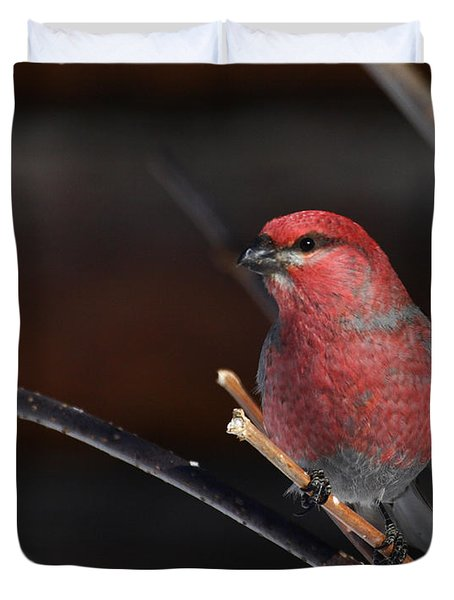 Male Pine Grosbeak Duvet Cover