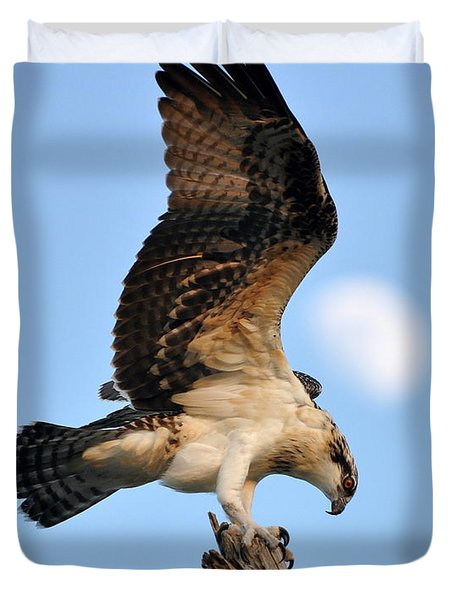 Osprey In Flight Duvet Cover by Rick Frost