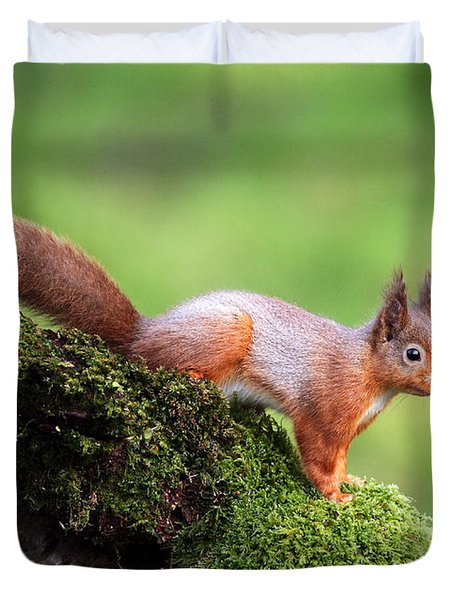 Red Squirrel Duvet Cover by Grant Glendinning