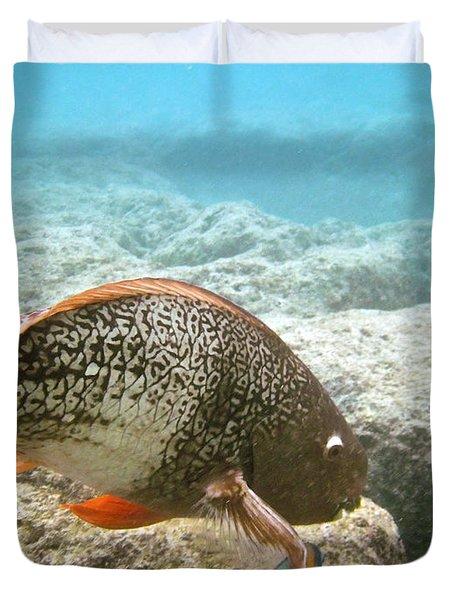 Redlip Parrotfish Duvet Cover by Michael Peychich