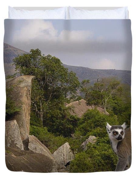 Ring-tailed Lemur Lemur Catta Portrait Duvet Cover by Pete Oxford