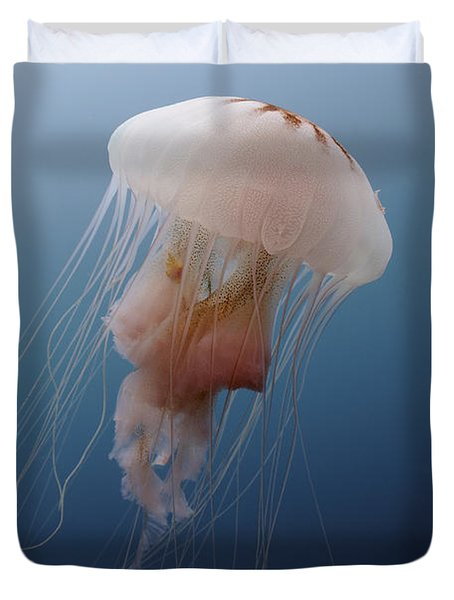 Sea Nettle Jellyfish In Atlantic Ocean Duvet Cover by Karen Doody