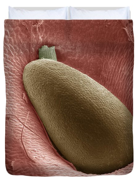 Sem Of A Strawberry Seed Duvet Cover by Ted Kinsman