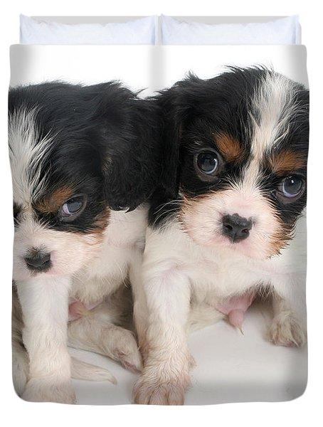 Spaniel Puppies Duvet Cover by Jane Burton