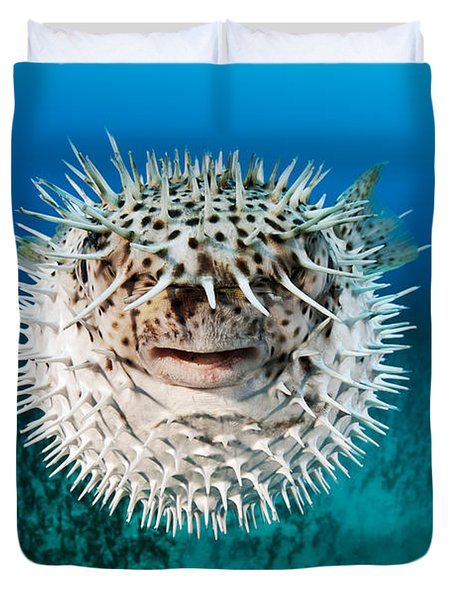 Spotted Porcupinefish Duvet Cover by Dave Fleetham