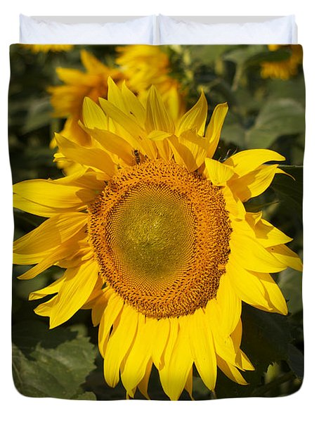 Duvet Cover featuring the photograph Sun Flower by William Norton