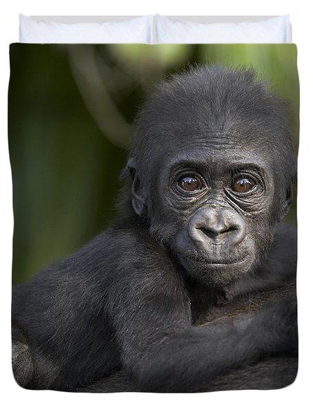 Western Lowland Gorilla Gorilla Gorilla Duvet Cover by San Diego Zoo