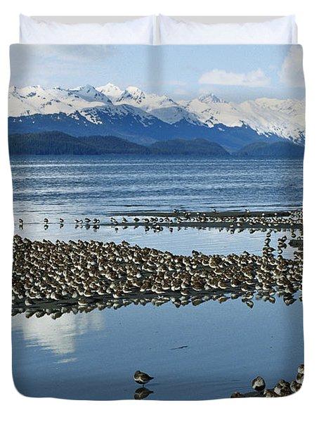 Western Sandpiper Calidris Mauri Flock Duvet Cover by Michael Quinton