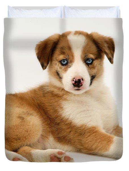 Border Collie Puppy Duvet Cover by Jane Burton