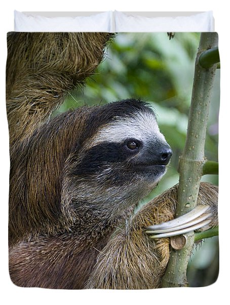 Brown-throated Three-toed Sloth Duvet Cover by Suzi Eszterhas