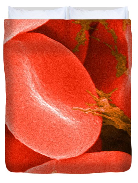 Red Blood Cells Sem Duvet Cover by Science Source