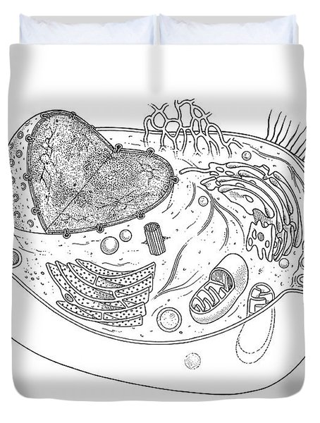 Animal Cell Diagram Duvet Cover by Science Source