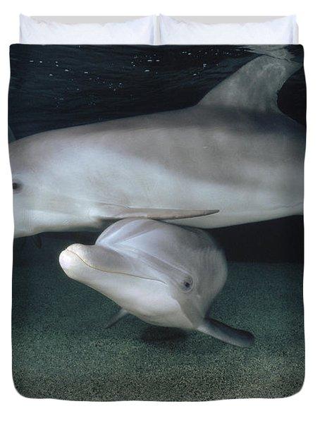 Bottlenose Dolphin Underwater Trio Duvet Cover by Flip Nicklin