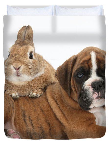 Boxer Puppy And Netherland-cross Rabbit Duvet Cover by Mark Taylor