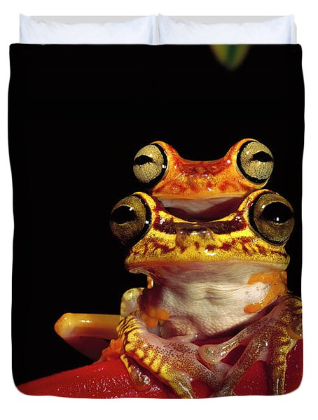 Chachi Tree Frog Hyla Picturata Pair Duvet Cover by Pete Oxford