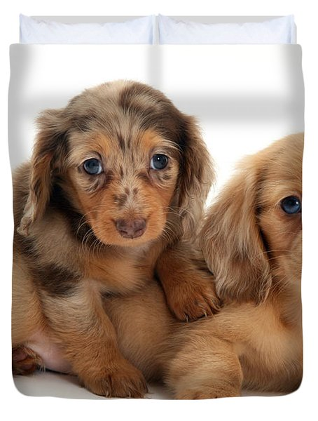 Dachshund Pups Duvet Cover by Jane Burton