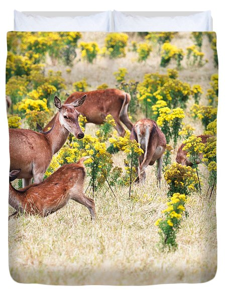 Deers Duvet Cover by MotHaiBaPhoto Prints