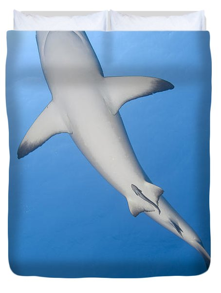 Gray Reef Shark With Remora, Papua New Duvet Cover by Steve Jones