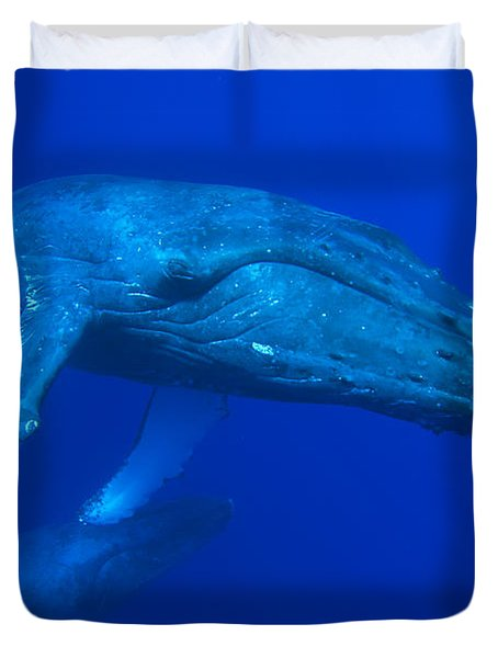 Humpback Whale Underwater Hawaii Duvet Cover by Flip Nicklin