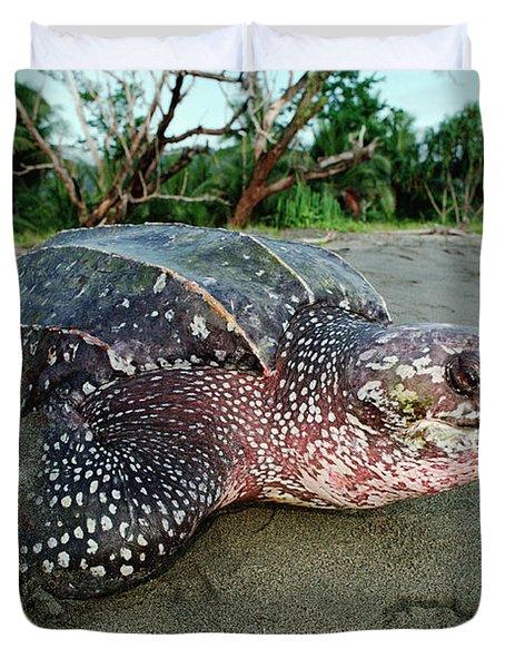 Leatherback Sea Turtle Dermochelys Duvet Cover by Mike Parry