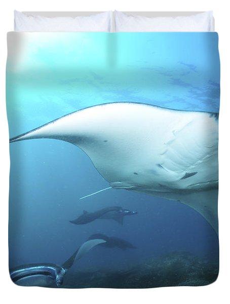 Manta Rays, Komodo, Indonesia Duvet Cover