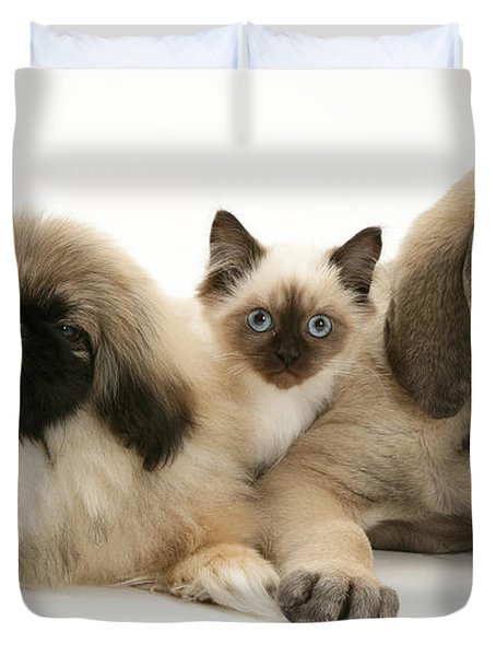 Puppies And Kitten Duvet Cover by Jane Burton