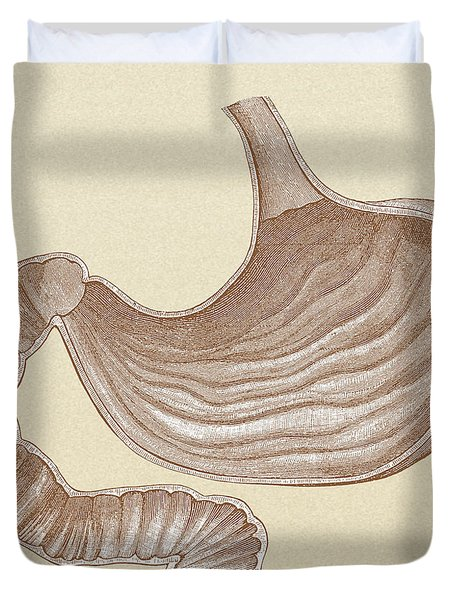 Stomach Duvet Cover