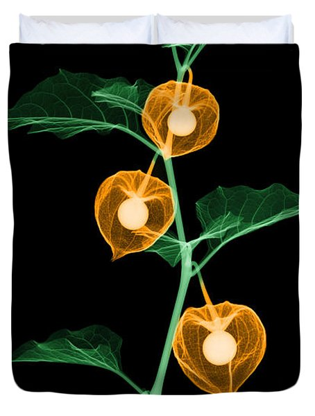 X-ray Of Chinese Lantern Plant Duvet Cover by Ted Kinsman