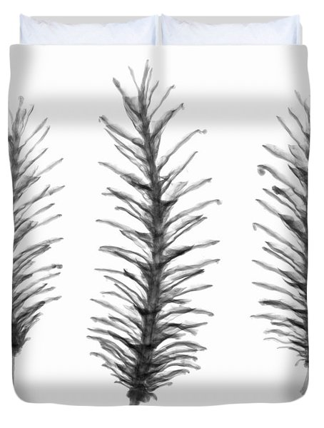 X-ray Of Pine Cones Duvet Cover by Ted Kinsman