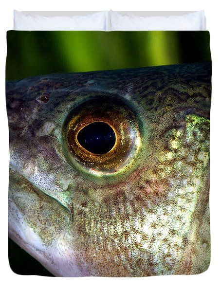 Yellow Perch Perca Flavescens Duvet Cover by Ted Kinsman