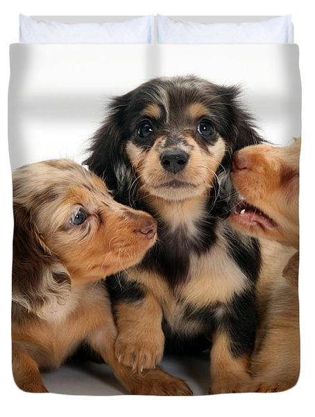 Dachshund Pups Duvet Cover by Jane Burton