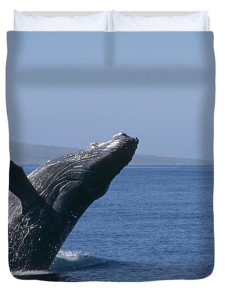 Humpback Whale Breaching Maui Hawaii Duvet Cover by Flip Nicklin