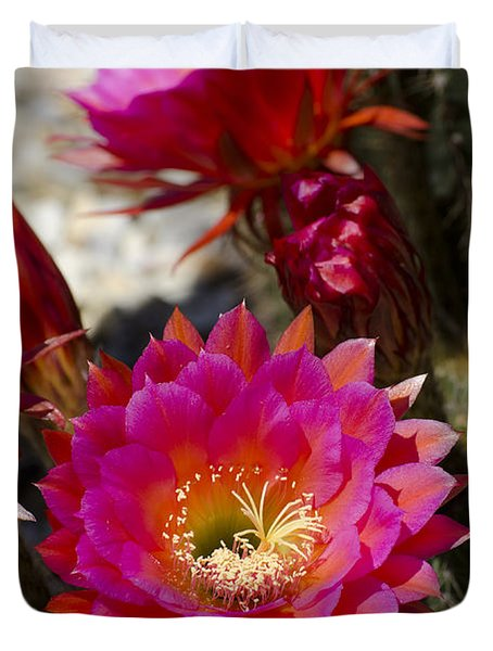 Pink Cactus Flowers Duvet Cover by Jim And Emily Bush