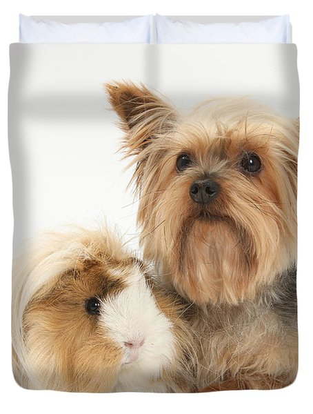 Yorkshire Terrier And Guinea Pig Duvet Cover by Mark Taylor