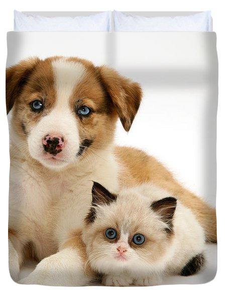 Border Collie And Birman-cross Kitten Duvet Cover by Jane Burton
