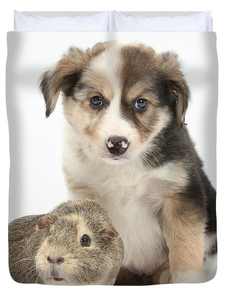 Border Collie Pup And Guinea Pig Duvet Cover by Mark Taylor
