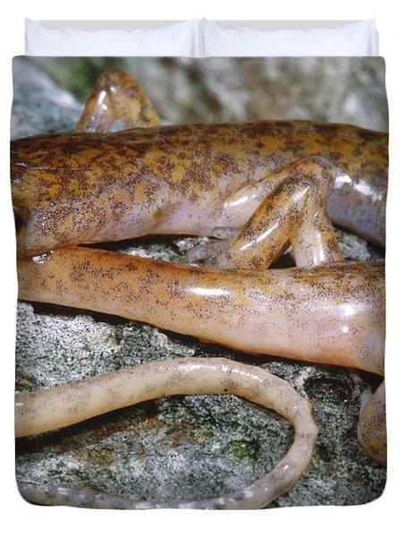 Cave Salamander Duvet Cover