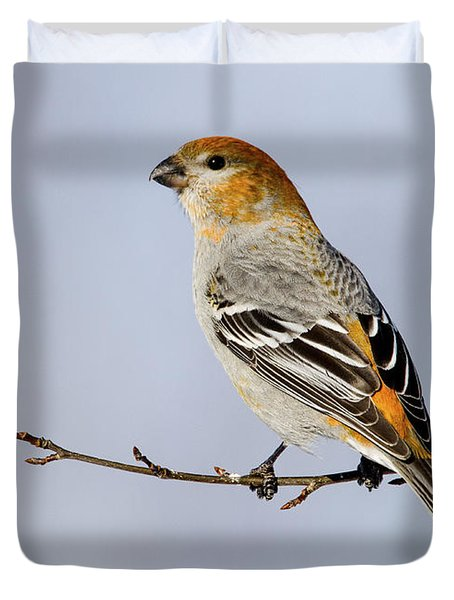 Female Pine Grosbeak Duvet Cover