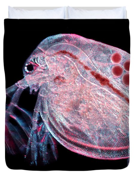 Water Flea Daphnia Magna Duvet Cover by Ted Kinsman