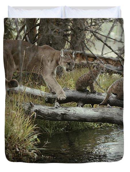 A Mountain Lion, Felis Concolor Duvet Cover by Jim And Jamie Dutcher