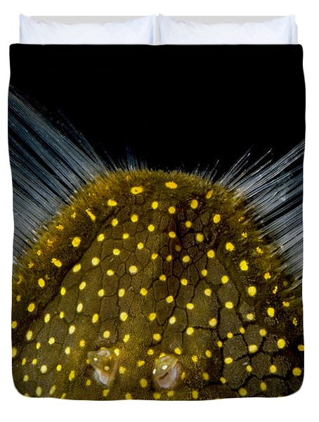 Amazon River Catfish Duvet Cover by Dante Fenolio
