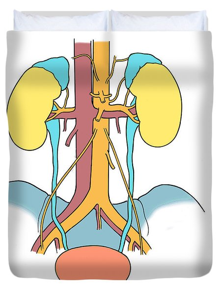 Illustration Of Urinary System Duvet Cover by Science Source