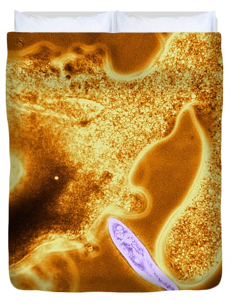 Light Micrograph Of Amoeba Catching Duvet Cover by Eric V. Grave