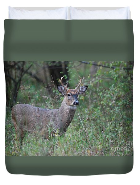 6 Point Buck Duvet Cover by David Murray