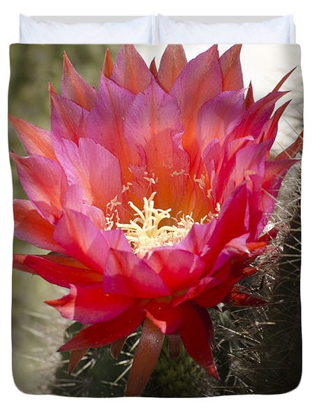 Red Cactus Flower Duvet Cover by Jim And Emily Bush