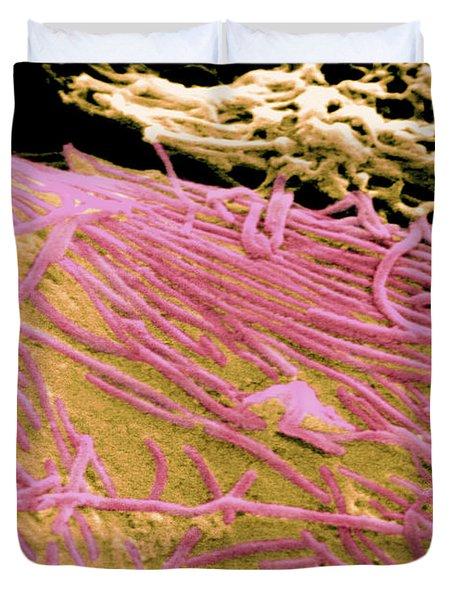 Ebola Virus, Sem Duvet Cover by Science Source